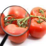 tomato analysis